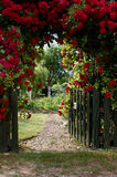 Red Rose Gate Stock Photography