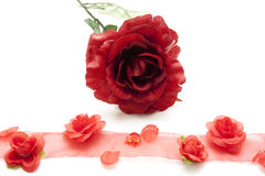 Red rose with gift loop Royalty Free Stock Image