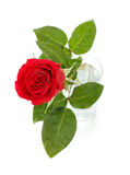 Red Rose In Glass Stock Photography
