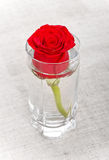 Red Rose in Glass Royalty Free Stock Photo