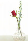 Red Rose in glass Stock Photo