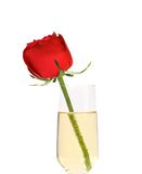 Red rose in glass of champagne. Royalty Free Stock Photo