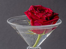 Red rose in glass. Red rose in cocktail glass with water Stock Photos