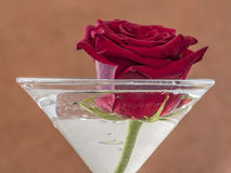 Red rose in glass. Red rose in cocktail glass with water Royalty Free Stock Images