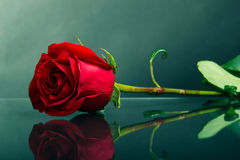 Red rose on glass. Red rose on the glass on a dark background Stock Photos