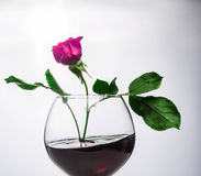 Red Rose in a glass goblet Royalty Free Stock Photo