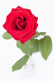 Red rose in glass vase on white Stock Image