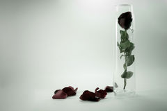 Red Rose in glass vintage Stock Photos
