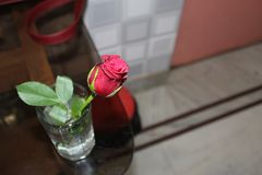 Red rose in a glass of water royalty free stock photography