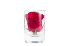 A red rose in a glass Royalty Free Stock Photos