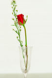 Red Rose in glass royalty free stock photos