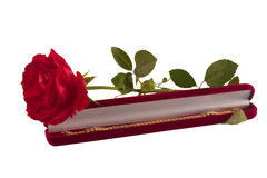 The red rose and gold bracelet Royalty Free Stock Photo