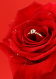 Red rose with a gold ring with a diamond Royalty Free Stock Photos