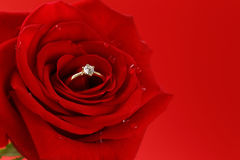 Red rose with a gold ring with a diamond Royalty Free Stock Photo