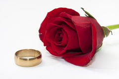 The red rose and gold ring Royalty Free Stock Photos