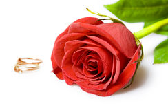 Red rose and gold wedding rings royalty free stock photo
