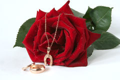 Red rose and golden chain Stock Images