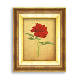 Red rose on golden frame with empty grunge paper for your pictur Royalty Free Stock Photos