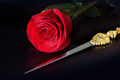 Red rose and golden roses Royalty Free Stock Photos