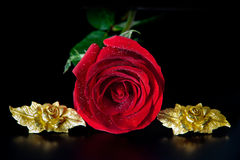 Red rose and golden roses Royalty Free Stock Photo
