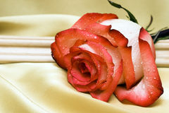 Red rose on golden satin Royalty Free Stock Photo