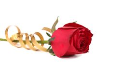 Red rose and golden streamer. Royalty Free Stock Photo