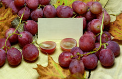 Red rose grapes  with blank papers card Stock Image