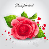 Red rose on a gray background-EPSi10. Romantic background for your text Royalty Free Stock Photo
