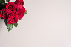 Red rose on gray background. For valentine day material background Stock Images