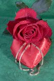 Red Rose on green Royalty Free Stock Photography