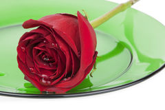 Red Rose on Green Glass Plate Royalty Free Stock Photos