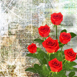 Red rose with green leaves on the abstract background Stock Photography