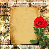 Red rose with green leaves on the wooden  background Royalty Free Stock Photos