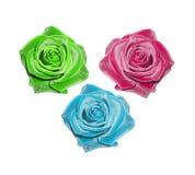 Red rose. Green  rose. Blue rose. Stock Image