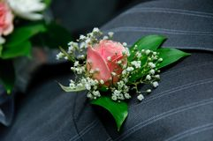 Red rose on a groom coat Stock Photo