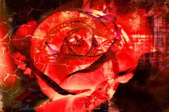 Red Rose - Grunge abstract textured background. Collage Stock Photography