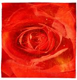 Red rose grunge background Royalty Free Stock Photo