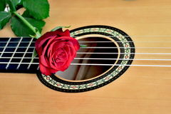 Red rose on guitar, close up view