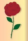 Red rose. Stock Photos