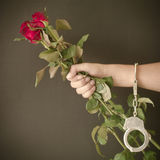 Red rose in hand with handcuffs Royalty Free Stock Image