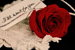 Red Rose with handwritten note Royalty Free Stock Photo