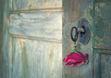 Red rose hanging from an old key. Green old wooden door opening with light shining through and red rose hanging from an old key Stock Photography
