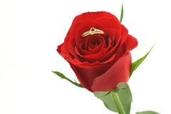 Red rose with heart shaped ring. Close-up of a red rose with a golden heart shaped ring in the middle stock photos