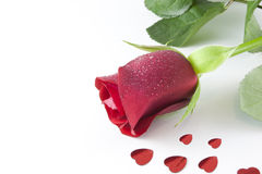 Red rose with hearts Royalty Free Stock Image