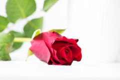 Red rose in high key Royalty Free Stock Photography