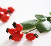 Red rose hip Stock Image
