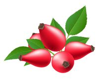 Red rose hip with leaf. Red rose hip berry with green leaf. Vector illustration isolated on white, for autumn and nature related design Vector Illustration