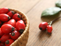 Red rose hips Royalty Free Stock Photography