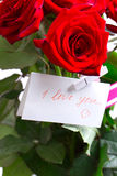 Red rose   on Holiday Stock Image