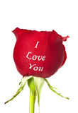 Red rose with I Love You printed on it Royalty Free Stock Photo